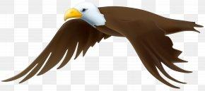 Eagle Transparent Clip Art Image - Eagle Clip Art PNG