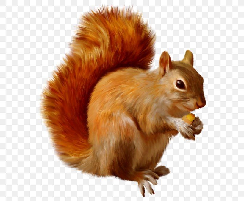 Squirrel Clip Art, PNG, 600x674px, Chipmunk, Eastern Gray Squirrel, Fauna, Flying Squirrel, Fox Squirrel Download Free