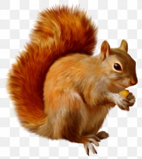 Squirrel Clipart - Squirrel Clip Art PNG