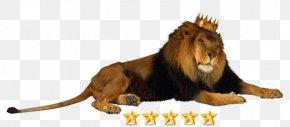 Lion - Lion Crown Jaguar King Of The Animals Clip Art PNG