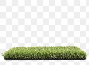 Allegro Lawn Artificial Turf Cupressus Proposal PNG