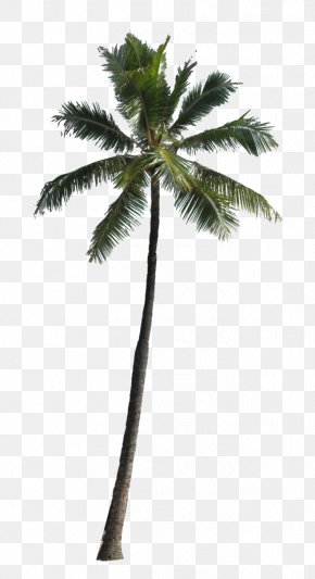 Palm Tree Image - Arecaceae Computer File PNG