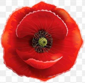 Poppy Transparent Clip Art Image - Poppy Flowers Clip Art PNG