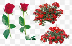 Rose Image Picture Download - Rose Flower Clip Art PNG
