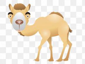 Desert - Dromedary Download Animal Clip Art PNG