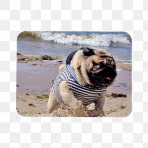 Pug Watercolor - Pug Dog Breed Toy Dog Running Snout PNG