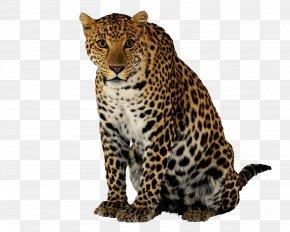 Leopard Clipart - Leopard Cheetah Clip Art PNG
