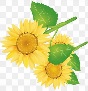 Sunflower Decorative Vector Pattern - Common Sunflower Decorative Arts PNG