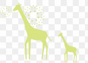 Giraffe - Giraffe Deer Illustration PNG