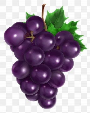 Transparent Grape Clipart Picture - Juice Common Grape Vine Fruit PNG