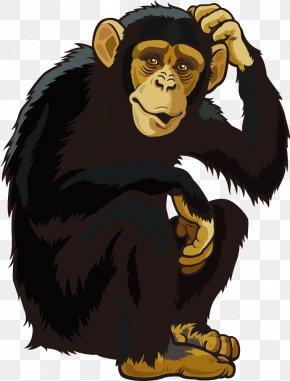 Vector Orangutan - Orangutan Ape Chimpanzee Monkey PNG