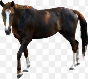 Horse - Horse Pony Download Clip Art PNG