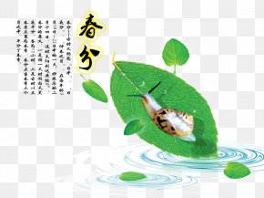 Spring Section Of The Spring Cents Picture - Chunfen Spring Illustration PNG