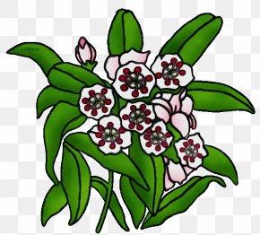 Herbaceous Plant Petal - Flower Plant Leaf Petal Herbaceous Plant PNG
