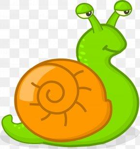 Slug Sea Snail - Snails And Slugs Snail Green Sea Snail Slug PNG
