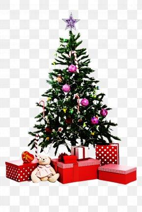 Fir Spruce - Christmas Tree PNG