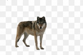 Wolf - Gray Wolf Food Chain DeviantArt PNG