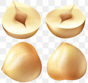 Hazelnuts Clip Art Image - Clip Art PNG