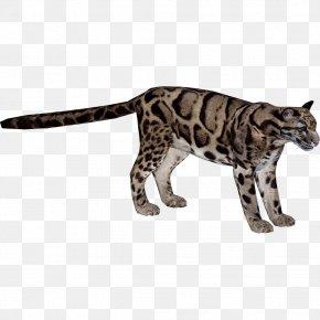 Leopard - Felidae Indian Leopard Formosan Clouded Leopard Wildcat Lion PNG