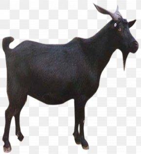 Black Goat - Goat Sheep Download PNG