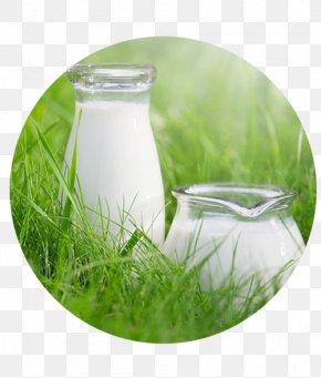Buffalo Milk - Cow's Milk Taurine Cattle Arla Foods Raw Milk PNG