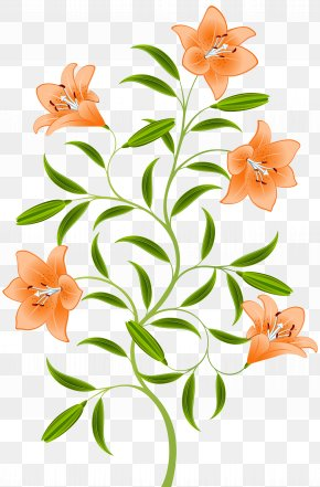 Orange Lily Clip Art Image - Orange Lilium Bulbiferum Hemerocallis Fulva Tiger Lily PNG
