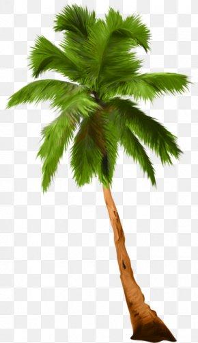 Tree - Arboles Y Arbustos Asian Palmyra Palm Tree Shrub PNG