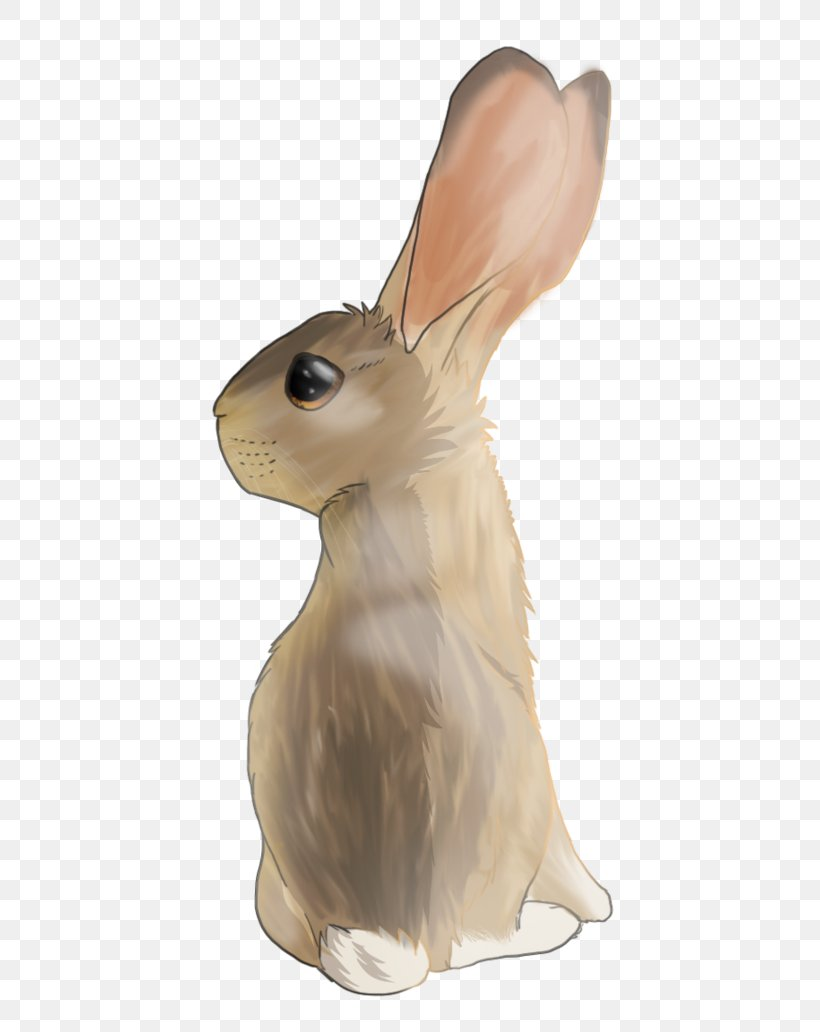Domestic Rabbit Hare, PNG, 774x1032px, Domestic Rabbit, Hare, Mammal, Rabbit, Rabits And Hares Download Free