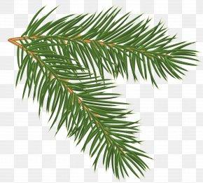 Pine Branch Clip-Art Image - Pine Branch Clip Art PNG