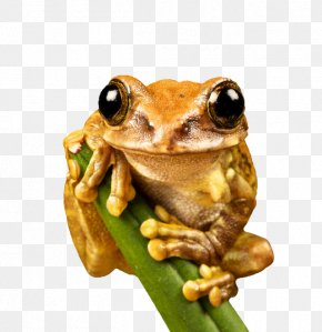 Khaki Frog - Environment And Sustainability: A Policy Handbook Environment And Sustainability Policy: Creation, Implementation, Evaluation Animal Frog Natural Environment PNG