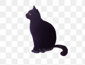 Noble Black Cat - Bombay Cat Black Cat Kitten Whiskers Domestic Short-haired Cat PNG