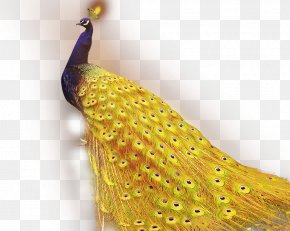 Exquisite Peacock - 1+1=2 Golden App Android Application Package Peafowl PNG