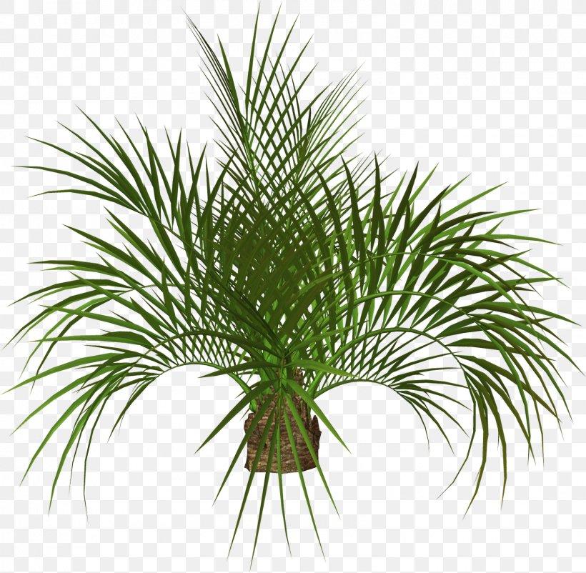 Arecaceae Tree Plant Clip Art, PNG, 1600x1566px, 3d Computer Graphics, 3d Modeling, Arecaceae, Areca Palm, Arecales Download Free