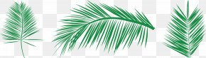 Areca Tree Needle Ye Lin - Leaf Palm Branch Arecaceae Clip Art PNG