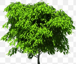 Tree Top View - Tree Royalty-free Clip Art PNG