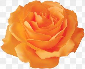 Orange Rose Transparent Clip Art Image - Blue Rose Clip Art PNG