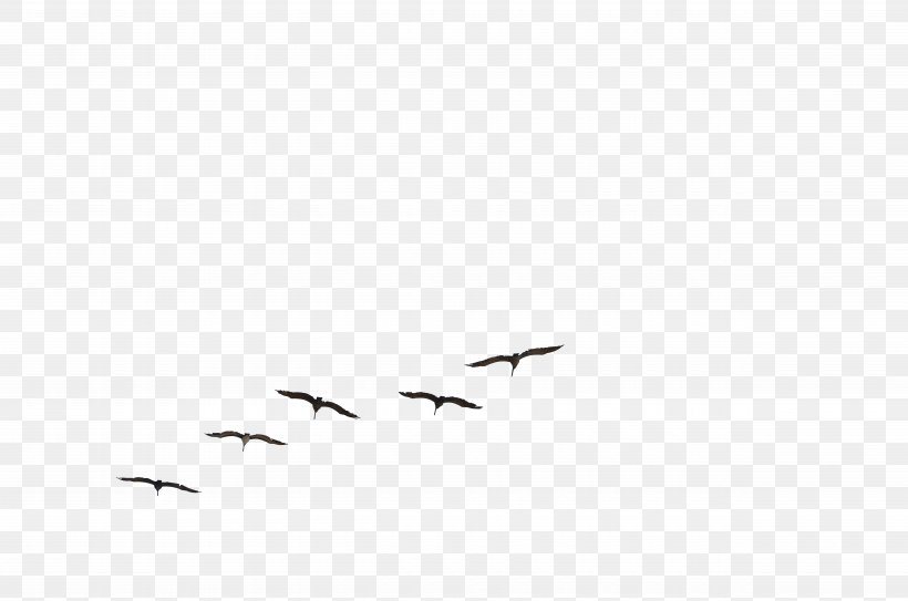 Bird Flight Gulls Brown Pelican Flock, PNG, 9900x6557px, Bird, Animal Migration, Beak, Bird Flight, Bird Migration Download Free