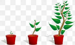 Cartoon Plants - United States Student Pre-school Learning Teacher PNG
