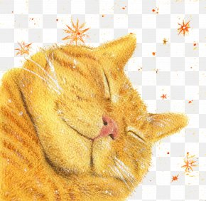 Cats Sleep Late - Kitten Whiskers Tabby Cat PNG