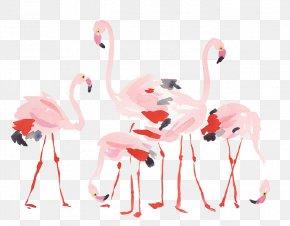 Cartoon Flamingo - Flamingos Bird PNG