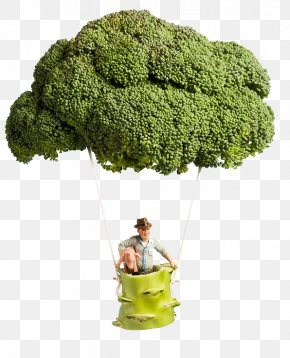 Broccoli - Villorba Sustainability Organic Farming Agriculture Food PNG