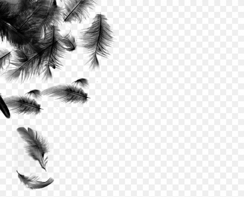 White Feather Bird Desktop Wallpaper Png 960x776px