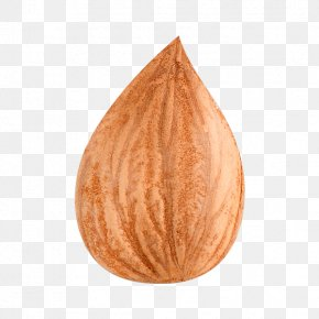 Walnut Physical Map - Apricot Kernel Dried Fruit PNG