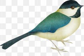 Bird - Bird Animal American Sparrows Clip Art PNG