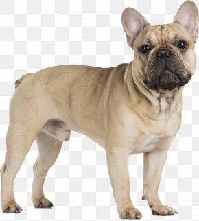 Bulldog - French Bulldog Cavalier King Charles Spaniel Pug PNG