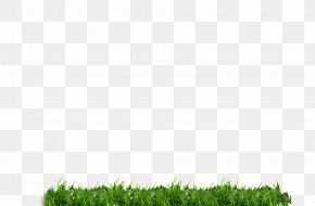 Green Grass - Green Download Icon PNG