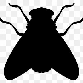 Insect - Insect Silhouette Fly Cockroach PNG
