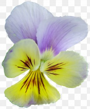Pansy Archive File RAR Clip Art PNG