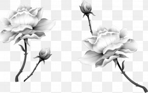 Vector Black And White Lotus - Nelumbo Nucifera Ink Wash Painting Black And White PNG