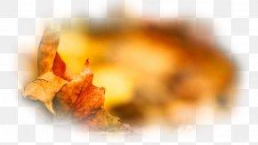 Autumn - Autumn Desktop Wallpaper Painting Leaf PNG